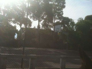 footscray local primary school hoop